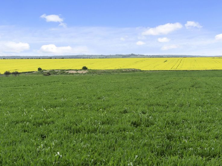 Well appointed Shelford cropping-grazing farm for sale. See more:   #Victoria #Meredith #ForSale #FarmProperty #RealEstate #Cropping