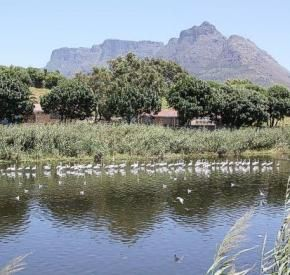 Raapenberg Bird Sanctuary | Observatory | Cape Town #birds