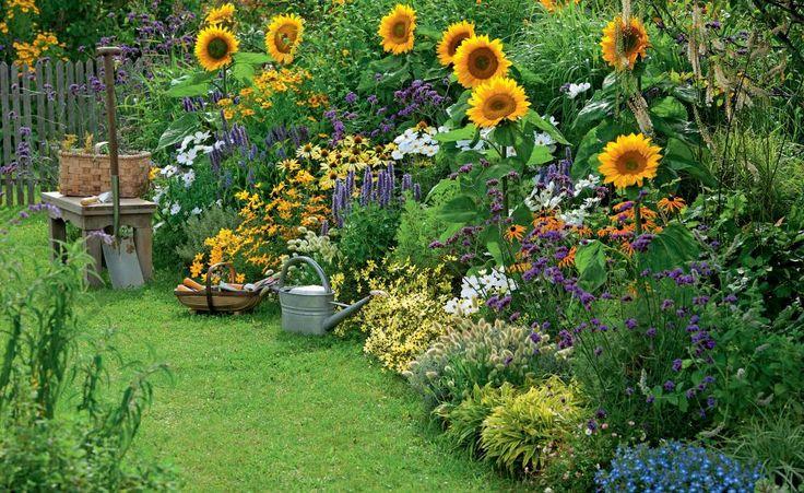 Foto: Sonnenblumen im Spätsommer sind einfach ein Bestandteil eines Landhausgartens. Wenn man sie ein Stück in den Hintergrund setzt und mittelhohe Stauden daneben und davor, dann kann man ihre oft unglücklich wirkende Größe ausgleichen. Marexa