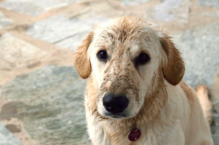Lilly liebt Wasser und Pfützen und ich liebe es sie happy zu sein, darum sage ich selten nein wenn sie mit Anlauf in die nächste Pfütze springt oder sich bei Regen im nassen Sand am Strand wälzt. Ihr Freude darüber ist einfach zu groß..