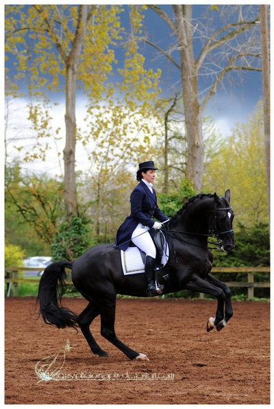 ski dressage equestrian dating The innovative skito equalizer® contoured dressage saddle pad offers superior support, comfort plush 100% wool fleece cozies up against your horse.