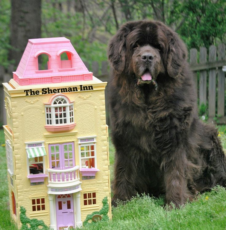 Looking to hit the road with your big dog this summer? Here's a list of 5 hotel chains that allow big dogs to stay in their hotel.