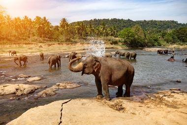 India Sri Lanka Explorer Solo Connections - www.soloconnections.com.au