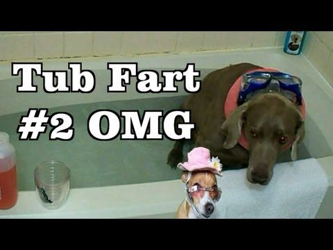 Bath Tub Fart my funny Dog Farts Underwater,two Dogs enter one bubble le...