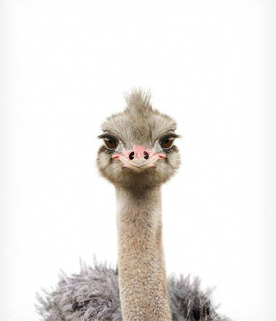 baby ostrich print,Ostrich Art,Nursery wall art decor,Ostrich hello little one