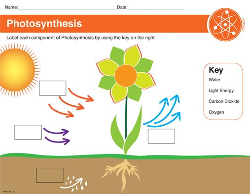 photosynthesis worksheet things to learn pinterest photosynthesis worksheets and activities. Black Bedroom Furniture Sets. Home Design Ideas