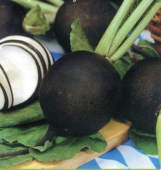 Gyógyító növényeink  fekete retek jó köhögés, rekedtség, megfázásesetén,  légúti betegségeknél .  A friss retek elősegíti az epe és a gyomornedvek elválasztását.  antioxidáns tulajdonságú Enyhe májvédő hatású.Reteklé kúra:  A  retket préseljük ki .Májtisztítás céljából alkalmazzuk min. 6 héten keresztül.  (A MAGYARSÁG A MAG NÉPE)