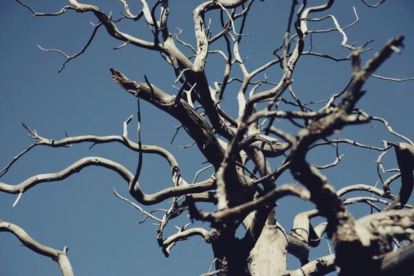 The Death Tree by Steven Baconnais, via Behance