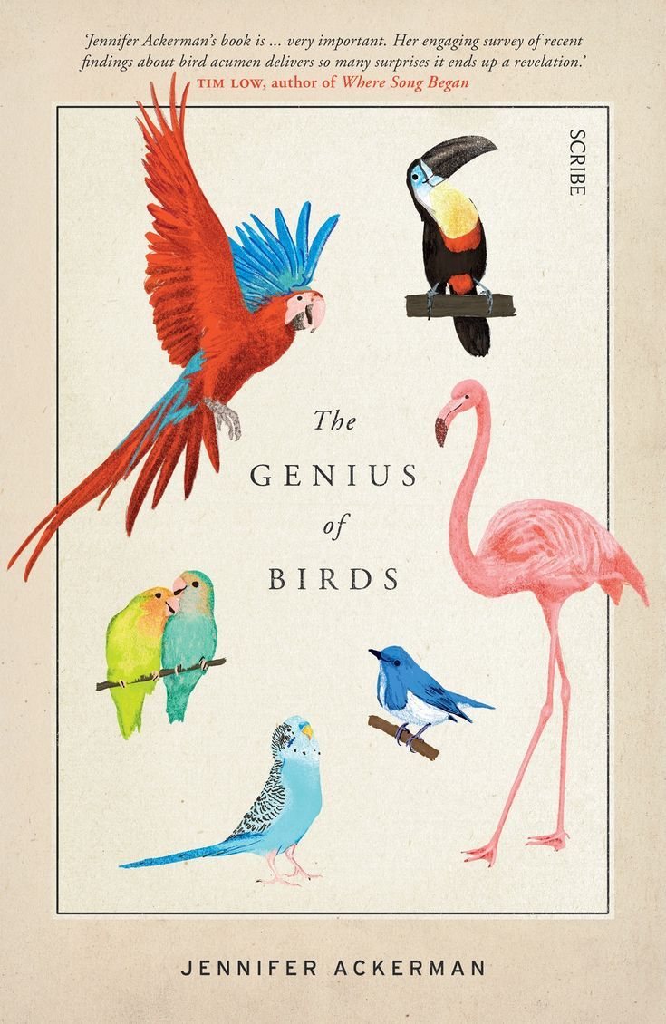 """""""Jennifer Ackerman's new book THE GENIUS OF BIRDS is a book for ornithologists and bird lovers as well as anyone interested in neurology or science."""" Kernel Deb gets her bird love and intelligence on reviewing THE GENIUS OF BIRDS by Jennifer Ackernam - out now from Scribe Publications. http://saltypopcorn.com.au/genius-of-birds/"""