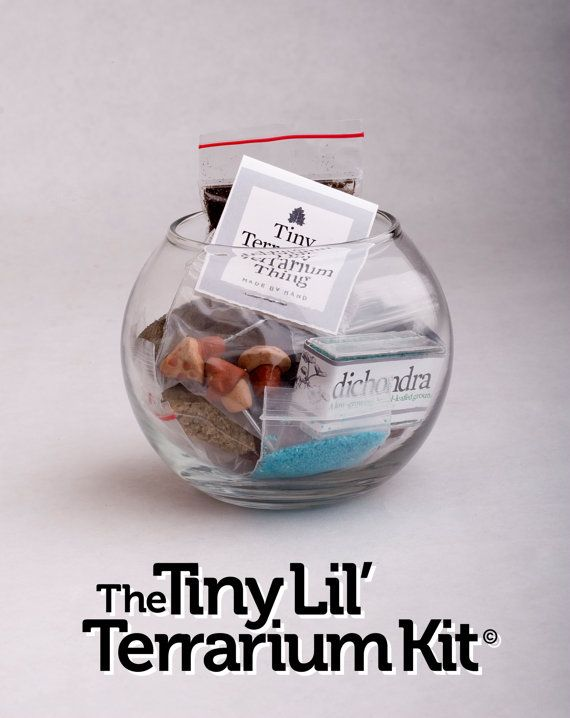 Tiny Lil' Terrarium Kit Desktop Micro-Environment - Everything you need container planter on Etsy, $16.00