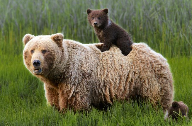 Lake Clark National Park Bear Viewing - From Mild to Wild: How to See Alaska's National Parks | Fodor's Travel