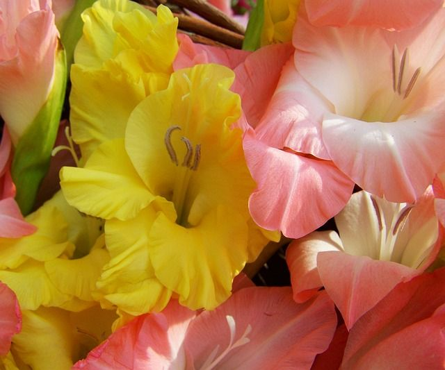 18 Blooming Bulbs To Enjoy In Spring - Garden Pics and Tips