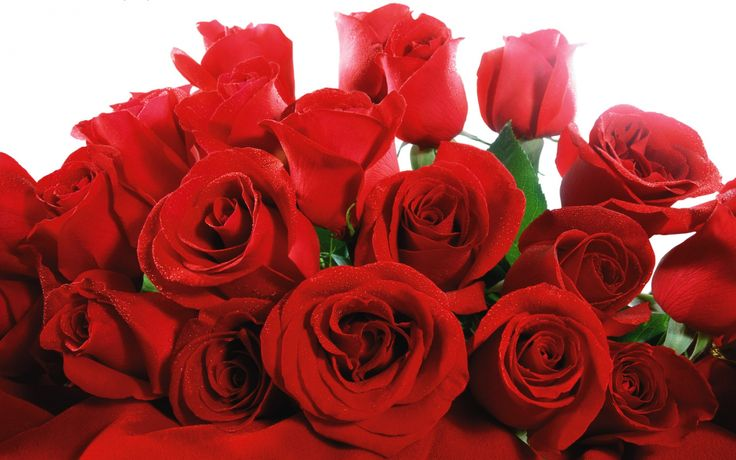 1680x1050: Red Valentine Roses Wide Download 1680x1050 2013