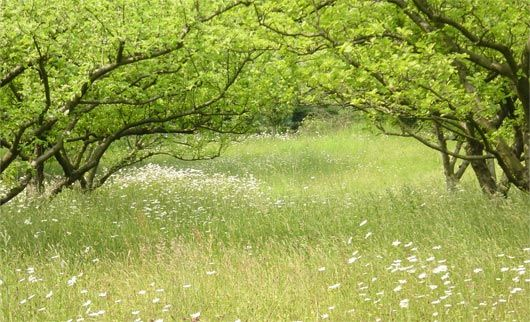 orchard | meadow