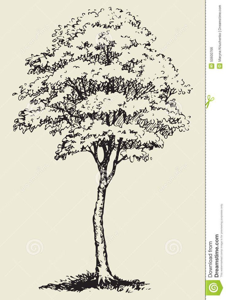 Big Tree Vector Sketch Stock Vector Image 50600766
