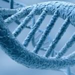 L'ADN va-t-elle remplacer les disques dur ?