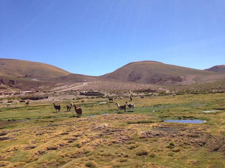 San Pedro de Atacama, Chile. #landscape