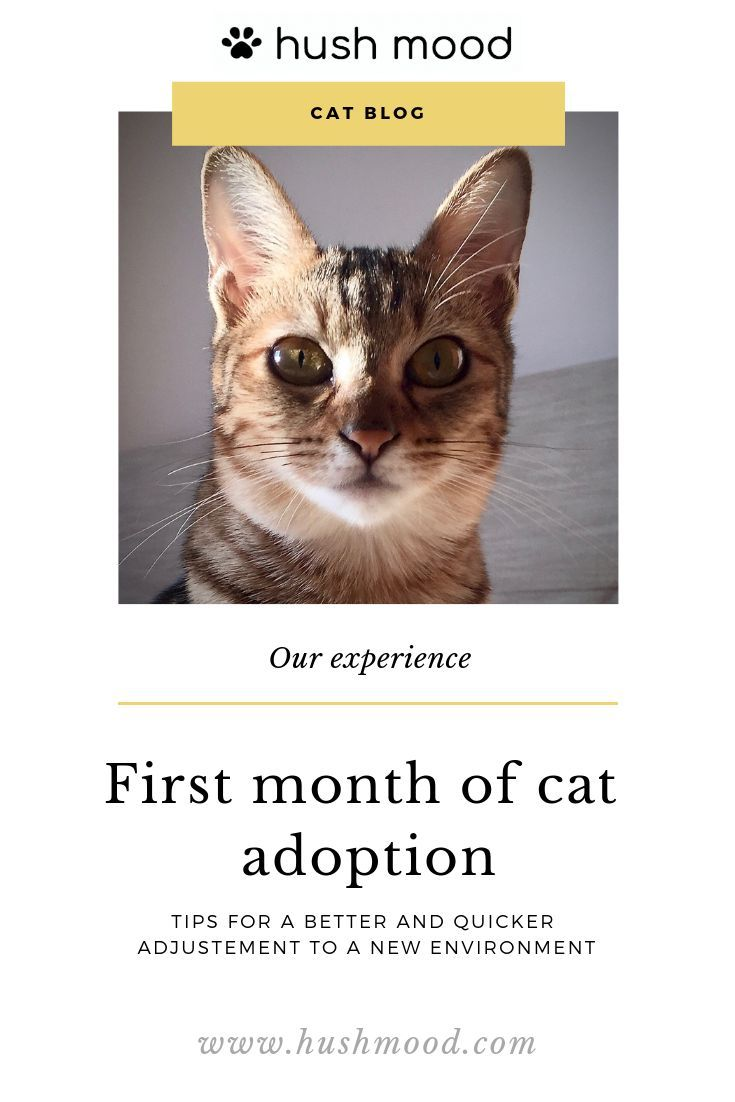 Account Suspended Cat Adoption Cats Cat Shelter