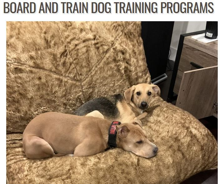 Commands That You Must Teach Your Dog Dogs Dog Training