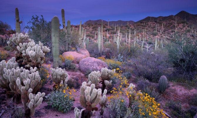 : Desserts, Secret Gardens, Favorite Places, Natural Beautiful, Soft Colors, Arizona, Cacti Gardens, Desert Flowers, Cactus