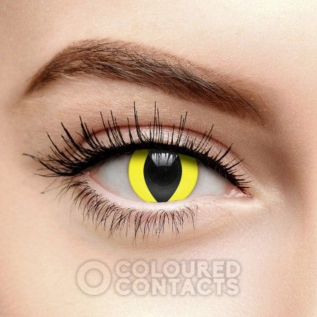 The Yellow Cat's Eye Coloured Prescription Contact Lenses in 90 Day. Become a feline with these wild animal coloured contacts. Perfect for Halloween costumes. $50/pair