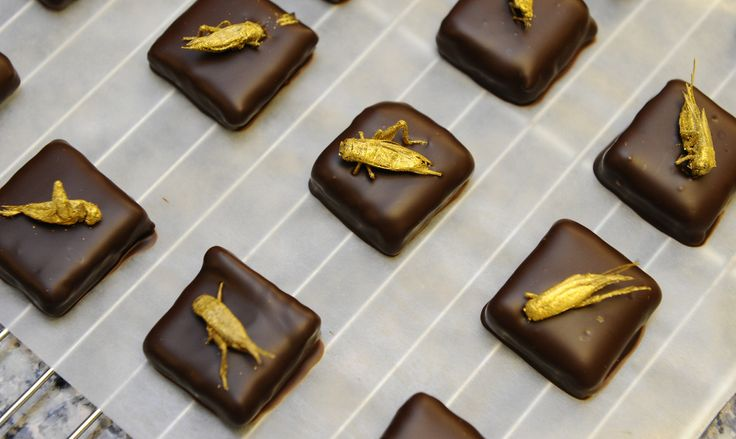 chocolates with gold dusted crickets by Sylvain Musquar