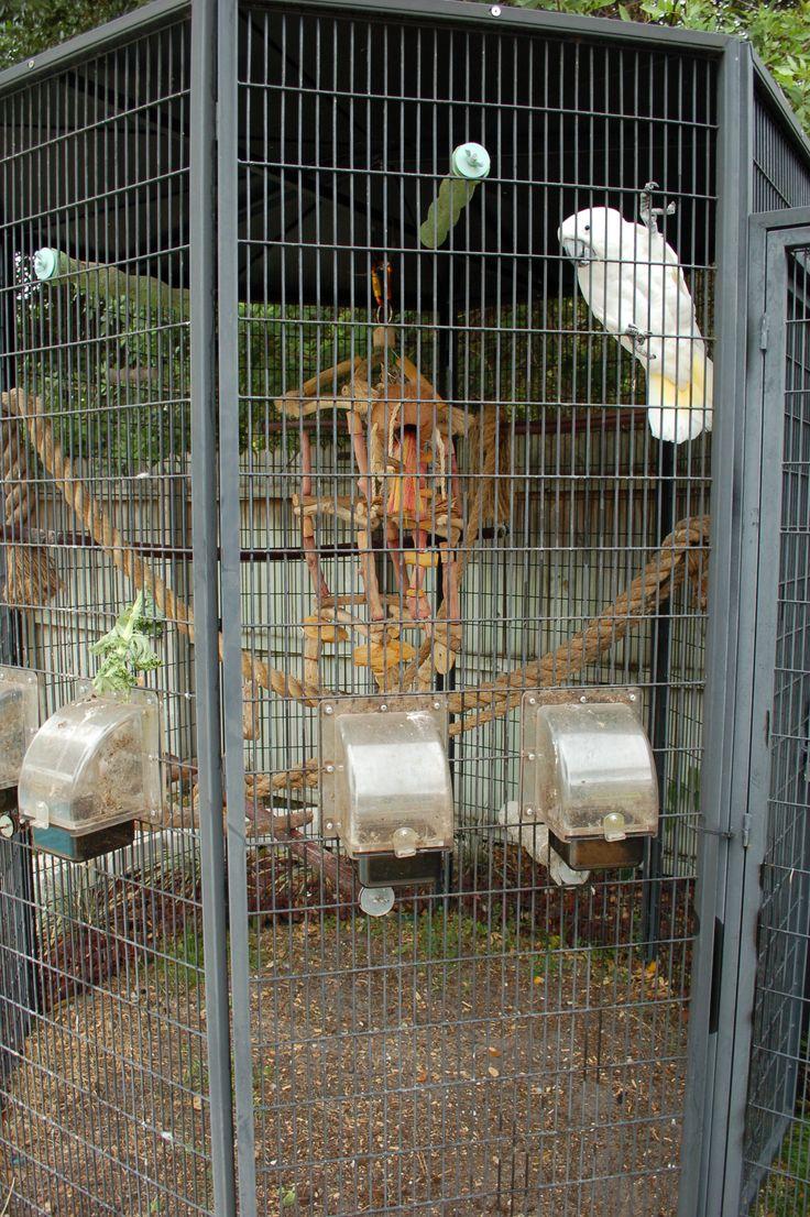 outdoor bird aviaries   Outdoor Bird Cages