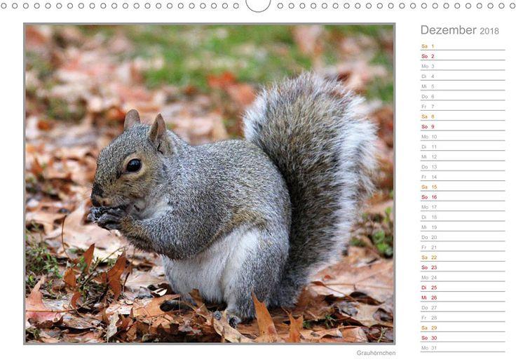 """Tierkalender mit Planer """"Hörnchen - neugierig, putzig, liebenswert"""", Kalenderblatt Dezember: Grauhörnchen"""