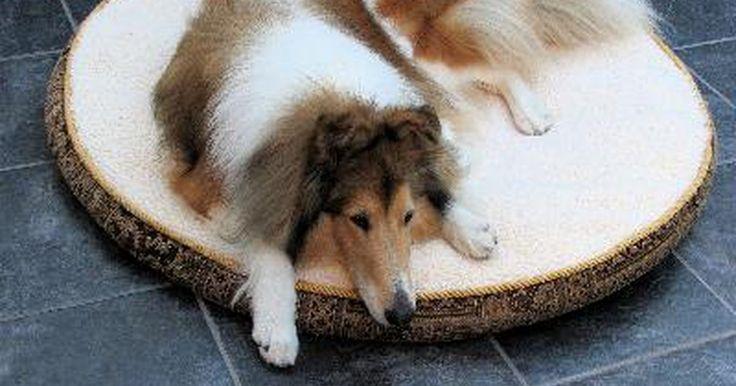 Cómo lograr que un perro enfermo coma. Tener un perro enfermo puede ser un momento difícil para cualquier dueño. Uno de los principales problemas es lidiar con la falta de apetito. Así como los humanos, los perros deben comer para tener fuerza y recuperarse de su enfermedad. Existen algunas maneras de alentarlo a que coma su comida.