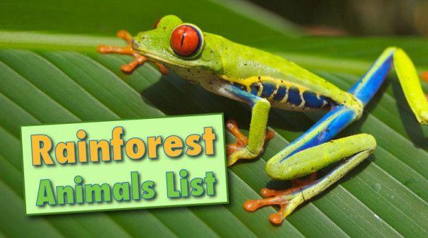 Rainforest Animals List