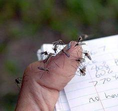 VIDEO – Come costruire la trappola anti-zanzare. Facilissimo e utilissimo!