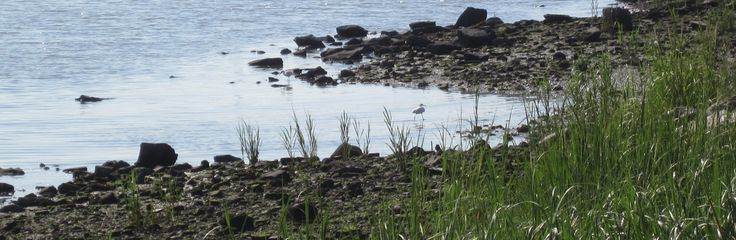 Environment - Wetlands - Randall's Island Park Alliance