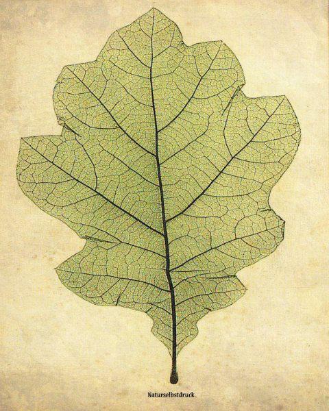 """Vintage Botanical Print """"Oak Leaf"""" Woodland Print - Green Chartreuse Leaf Illustration - Oak Tree Forest $30.00"""
