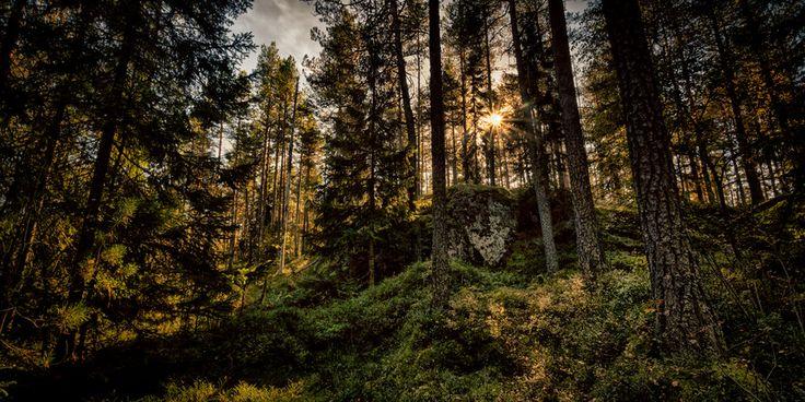 Forest by Erik Hansen on 500px