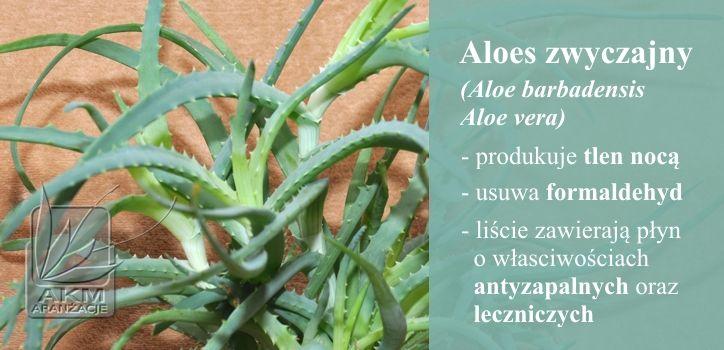 Pin By Darek Kacperek On Rosliny Domowe Oczyszczajace In 2020 Aloe Vera Plants Aloe