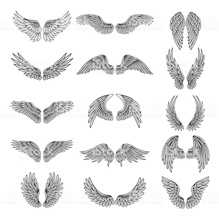Monochrome illustrations set of different stylized wings for logos or…