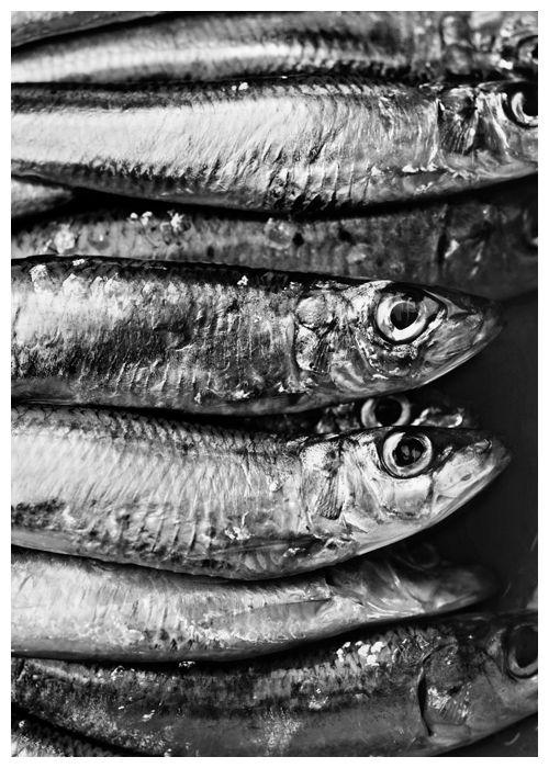 Sardines!