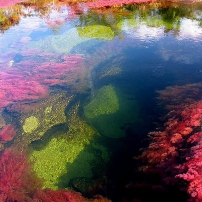 """The Caño Cristales River """"Rainbow River"""", Colombia"""