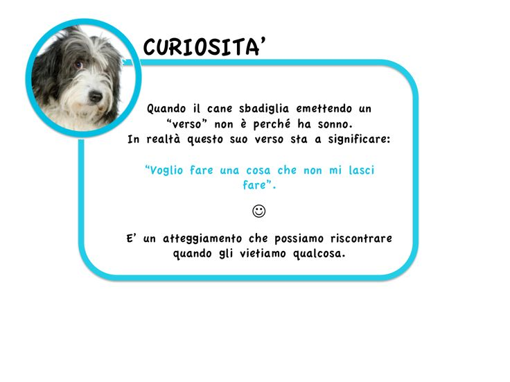 Lo sapevate che... www.cancorso.it cancorso2013, cancorso, cani, cane, concorso, concorsi, contest, ilmessaggero, quotidiano, animali, storie, canstorie, coppie, cancoppie, citazioni, aforismi, curiosità