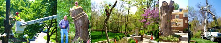 Tree Removal, Servicing All of the Kansas City Metropolitan Area