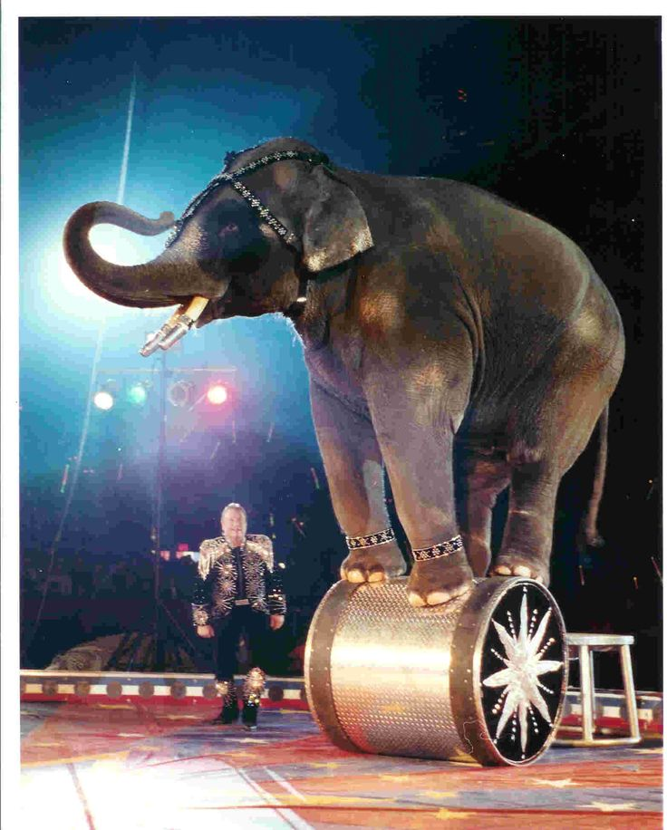 Positive Detroit: The Spectacular Shrine Circus Returns to Metro Detroit March 18