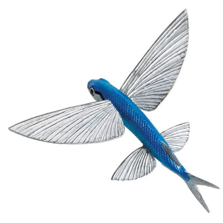 11 best Flying Fish images on Pinterest   Fish, Pisces and Fishing