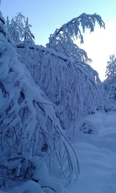 Luonto taipuu 29.1.16 kuusamo