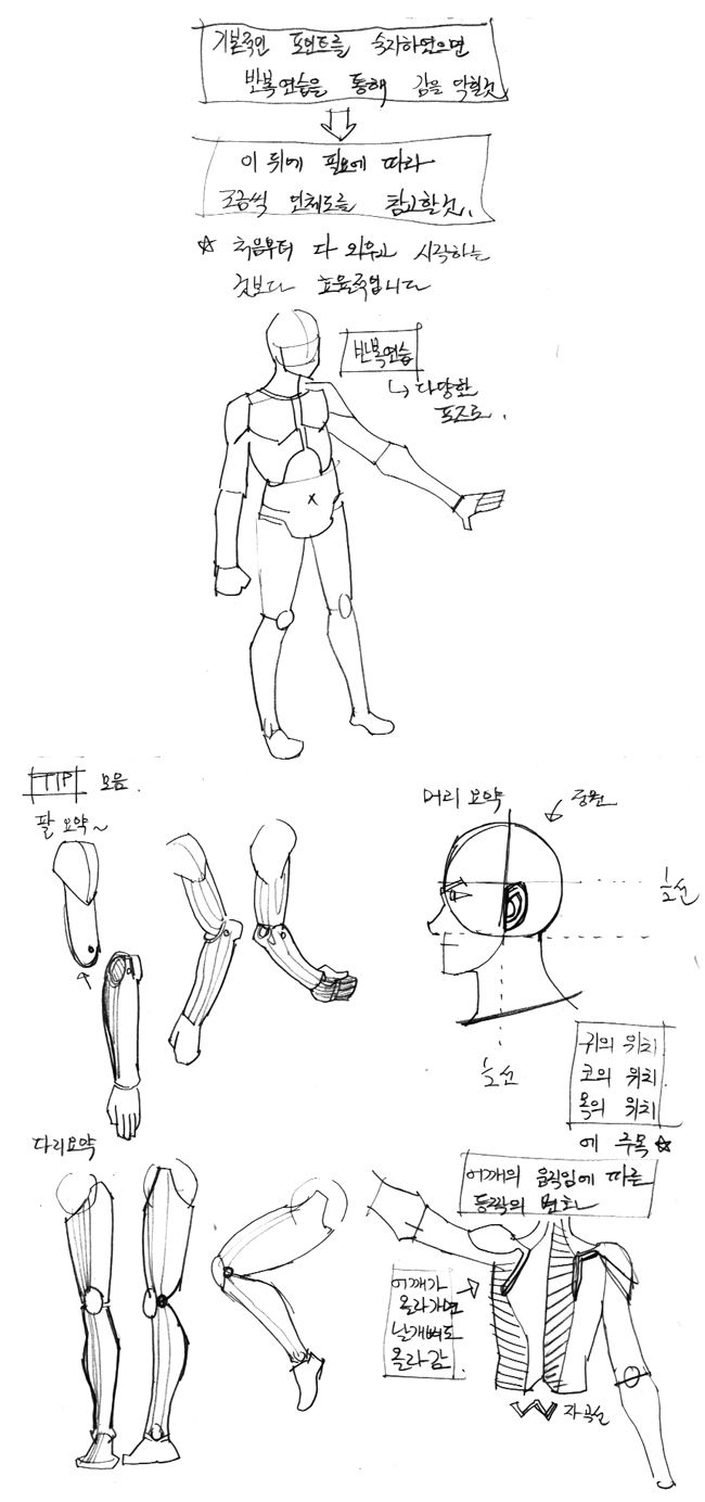 http://anatoref.tumblr.com/post/153172177186/a-simple-course-in-human-muscle-proportions