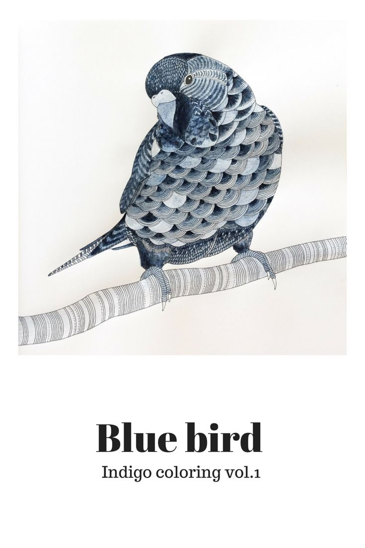 Animal Kingdom Colouring Book Indigo Coloring Vol From Illustration