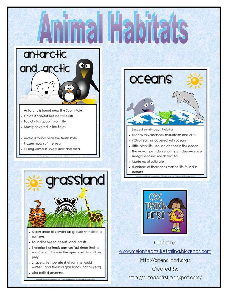 Animal Habitats Facts Posters/Sheets.  This includes the following habitats....desert, grasslands, oceans, ponds and wetlands, mountains and forests, antarctic and arctic and the rain forest