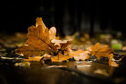 Fallen leaves are most beautiful  http://www.flickr.com/photos/ulfbjolin/8028970773/