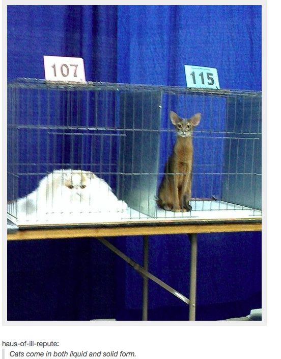 21 Times Tumblr Told The Truth About Cats     cats come in both liquid and solid form