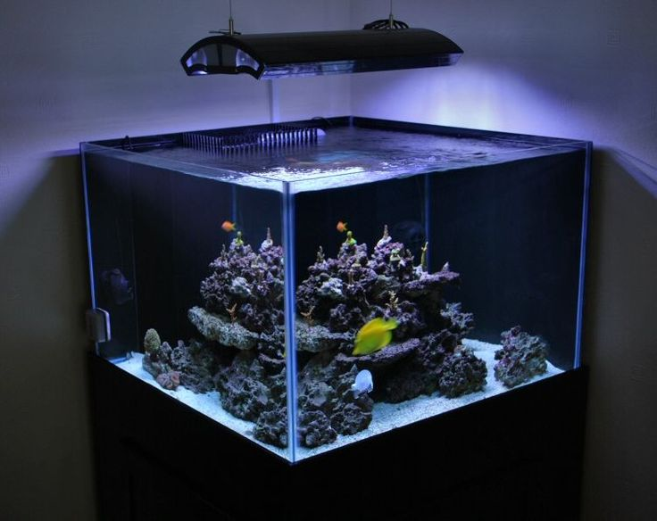 Top 29 ideas about saltwater fishtail ideas on pinterest for Cube saltwater fish tank