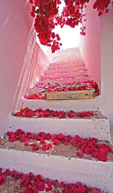 red + pink rose petals